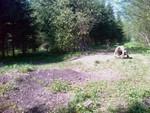 Meie äratehtud plats. Maapind on saanud roheliseks, mõne nädala pärast rohi lokkab.