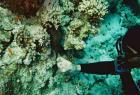 Punases meres 2-meetrise mureeni hambaid kõditamas