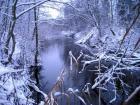 Talv Vääna jõel. Nii nagu möödunud nädalavahetusel komistasime kopratöö otsa Jussi järvedel, ei pääsenud me kopra langetatud puudest üle ronimisest ka Vääna jõe ürgorus nädal hiljem..