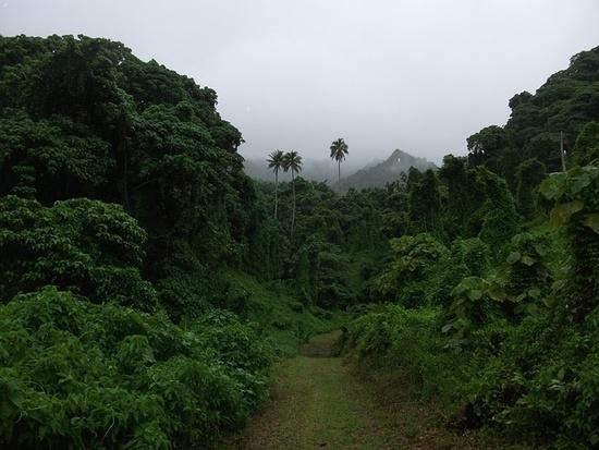 Cooki saared