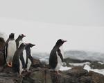 Pingviinid Antarktikas