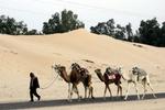 Tuneesia, Sahara, düünid ja kaamelid